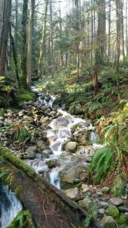 Mountain creek in Vancouver; picture taken during Drutopia leadership team gathering.