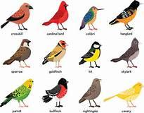 A graphical listing of types of birds, that are probably migratory.